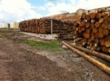 Tronchi Resinosi in Vendita - Vendo Tronchi Da Sega Southern Yellow Pine