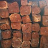 Hardwood Logs importers and buyers - Kosso / Doussie Square Logs