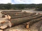 Germany Hardwood Logs - Tilia Saw Logs, 20+/ 26+ cm Diameter