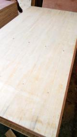 Plywood For Sale - Sell Acacia Natural Plywood