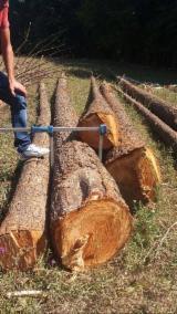 null - Douglas Fir  300-500 mm gater Saw Logs from Romania