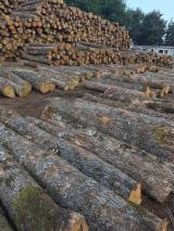 Bulgaria Hardwood Logs - European White Oak Logs, diameter 20-99 cm
