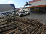 Forêts Et Grumes Amérique Du Sud - Vend Grumes De Trituration Eucalyptus