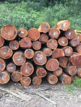 Cherry  Hardwood Logs - American Cherry Saw Logs, 3SC, diameter 12+ inches