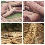 Wälder Und Rundholz Afrika - Schnittholzstämme