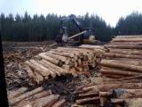 Wälder und Rundholz - Schnittholzstämme, FSC