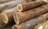 Wälder und Rundholz - Schnittholzstämme, Kampferholz