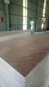 Plywood Panels - Offer for Commercial Plywood 12-25 mm (Okoume / Acacia), Carb-EPA certified