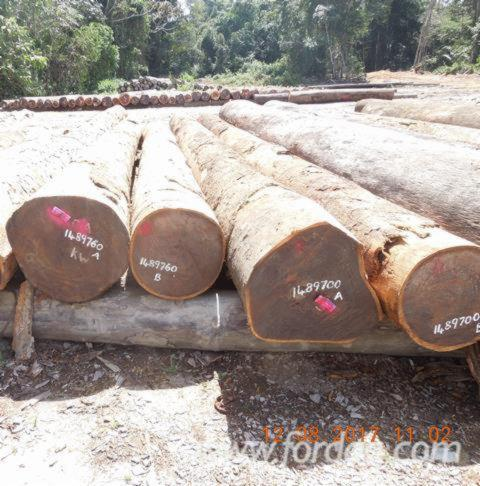 Guyana Tropical Hardwoods, Greenheart, Purpleheart, Wamara, Walaba, Mora and others