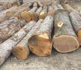 锯材级原木, 白橡木