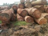 Doussie Hardwood Logs - Buying Doussie Round Logs, diameter 80+ cm
