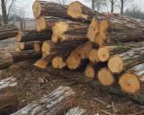 Laubrundholz  Zu Verkaufen - Schnittholzstämme