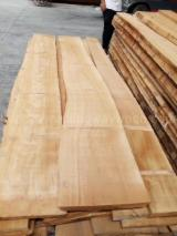 Beech  Unedged Timber - Boules importers and wholesale buyers - Buying European Beech Unedged Timber, Thickness 18-50 mm, A/AB