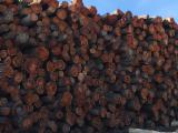 Cherry  Hardwood Logs - American Cherry Saw Logs, diameter 10+ inches