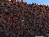 Bossen En Stammen Noord-Amerika - Zaagstammen, Kerselaar
