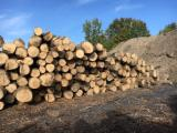 null - American Ash Saw Logs, diameter 10+ inches