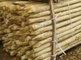 Acacia Hardwood Logs - Buying Acacia Poles for Children's Playground, diameter 8-38 cm