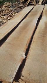 Poland Unedged Timber - Boules - Oak Unedged Loose Planks, Fresh, 25+ mm thick