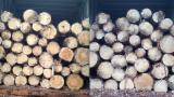 Troncos De Madera Blanda en venta - Venta Troncos Para Aserrar Pino Silvestre  - Madera Roja FSC Lituania
