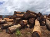 锯材级原木, 翼形红铁木