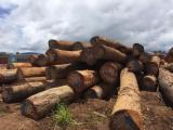 Azobe Saw Logs for Sale, diameter 60+ cm