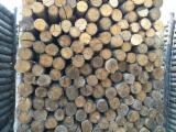 Chestnut  Hardwood Logs - Chestnut Poles on Pallets, diameter 6-12 cm