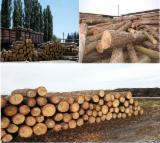 ISPM 15 Certified Softwood Logs - Offer for Pine logs 20cm+