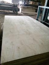 Contreplaqué Naturel - Vend Contreplaqué Naturel Eucalyptus 1220 mm Vietnam