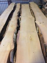 Latvia - Fordaq Online market - Unedged Birch Planks 24,25 mm