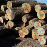 Ash  Hardwood Logs - Ash Logs 1SC-3SC 7.5+ft