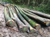 Ash  Hardwood Logs - Ash / Sycamore / Red Oak / Beech Logs 30+ cm