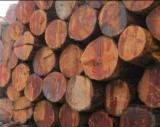 Softwood  Logs Demands - Buying Douglas Fir Saw Logs, 30-60 cm Diameter