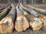 锯材级原木, 橡木