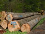 Germany Hardwood Logs - ABC Red Oak Saw Logs, diameter 30-60 cm