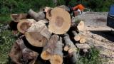 Forest Harvesting Forestry Job - Chainsaw Worker