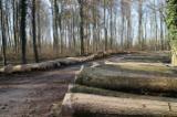 FSC Oak / White Ash / Walnut Logs 50-80 cm
