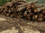Laubrundholz  Zu Verkaufen - Schnittholzstämme, Walnuss