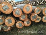 Laubrundholz  Gesuche - Schnittholzstämme, Eukalyptus