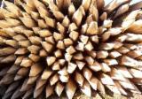 Forêts Et Grumes - Achète Poutres Rondes En Forme Conique Acacia