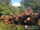 Hardwood  Logs For Sale - American Red Oak log (European origin). 40 cm. and more in diameter.