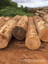 Hardwood  Logs For Sale - Fresh Sawn Bosse Boules