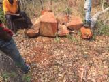 null - Mussivi / Mussibi / African Rosewood (Guibourtia Coleosperma) Square Logs, 50 cm wide