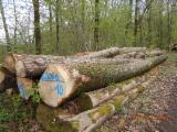 Germany Hardwood Logs - Buying Tillia Saw Logs, 40+ cm Diameter