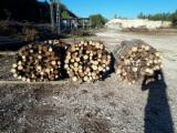 Hornbeam, Beech, Oak Firewood/Woodlogs Not Cleaved 100 cm