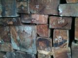 Hardwood  Logs Demands - Need Narra Padouk Square Logs 30+ cm
