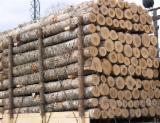 Hardwood  Logs Demands - Poplar / Aspen Industrial Logs 12-30 cm