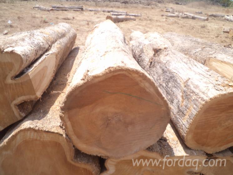 Fresh-Cut-Teak-Logs-from-Cameroon