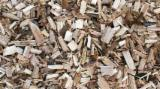 Find best timber supplies on Fordaq - Eucalyptus Wood Shavings