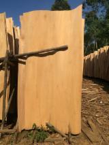 Schälfurnier Eukalyptus - Eukalyptus, Rundschälfurnier
