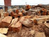 Uganda Hardwood Logs - Doussie Saw Logs from Congo, diameter 80 cm